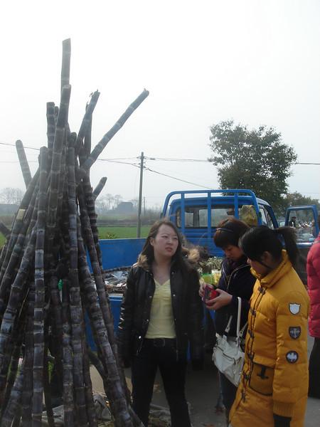 188 Sugar Canes.jpg
