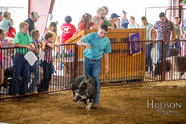 Div 03 Hog Showmanship