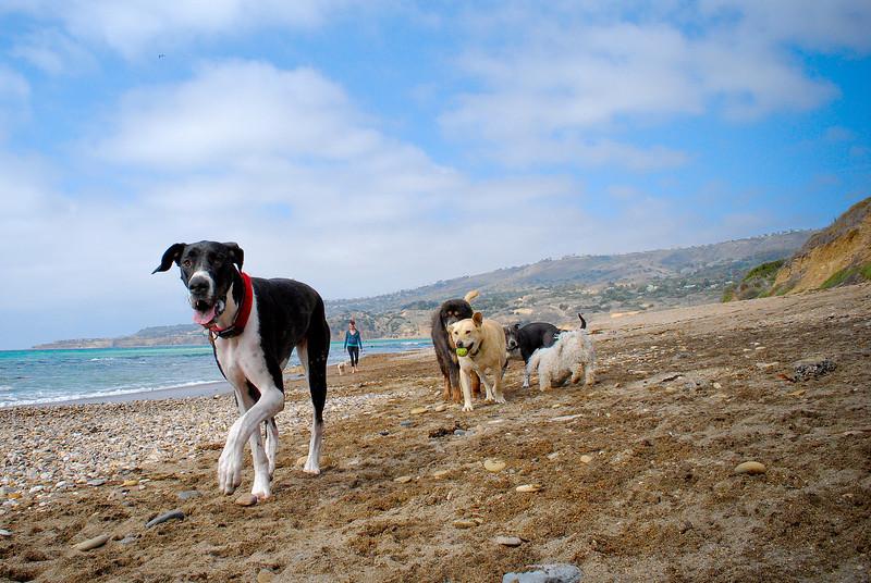 dogs_beach-065.jpg