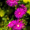 Flower-008