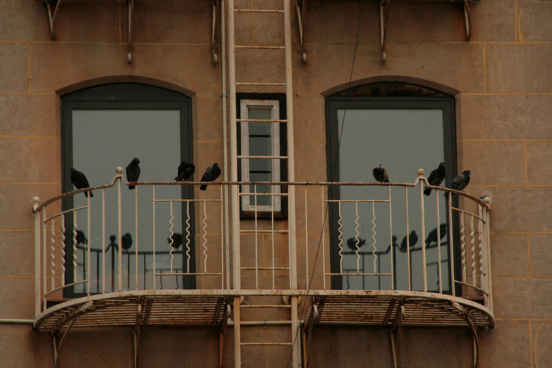 Pigeon roost