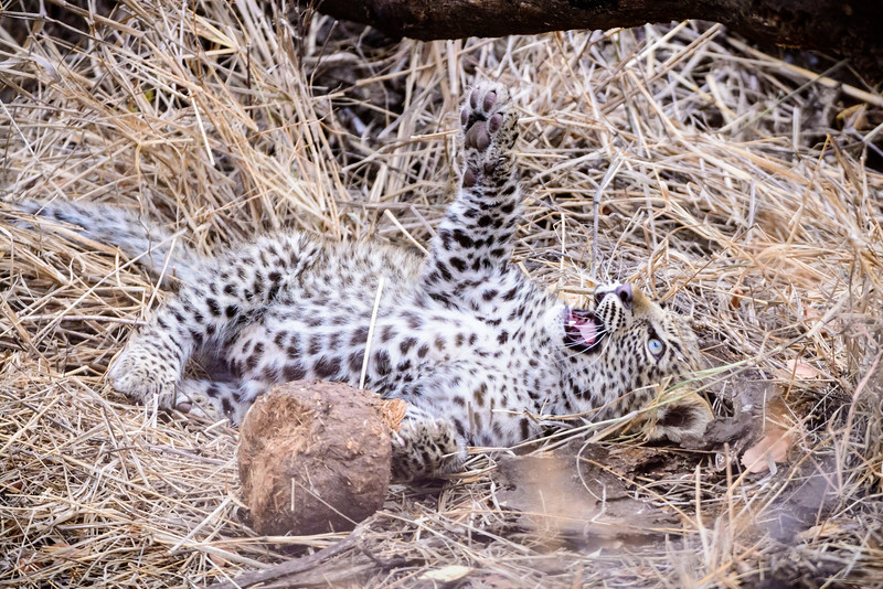 LeopardHills-20150827-5070.jpg