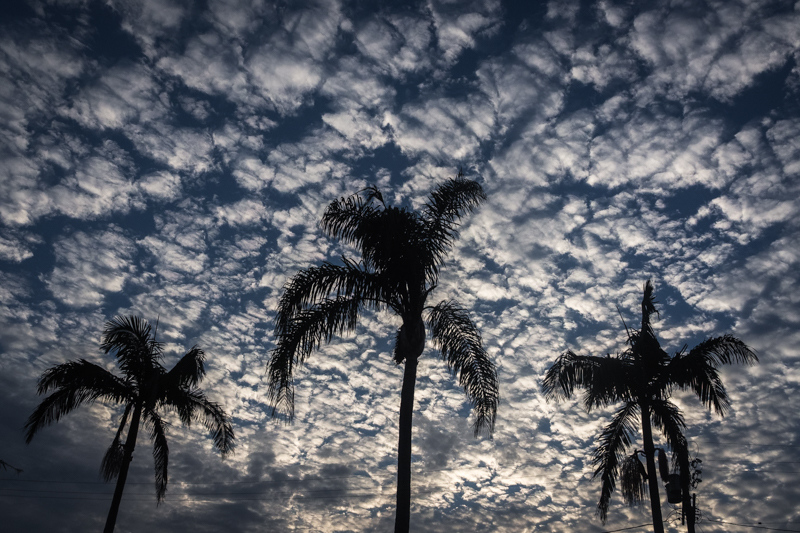 September 2 - Clouds, sky and palm trees in Los Angeles.jpg