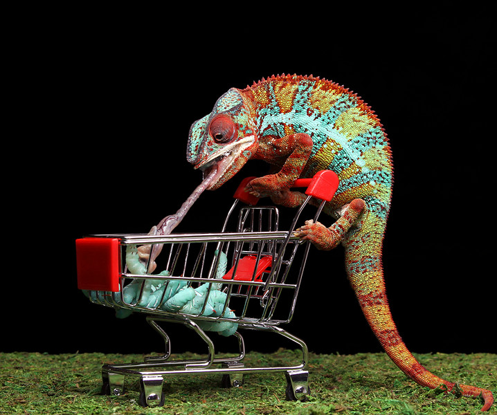 Grocery Shopper.jpg