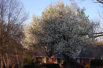 Spring 2010
