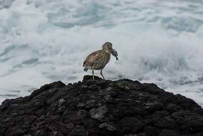 Hawaiian Birds - The Big Island