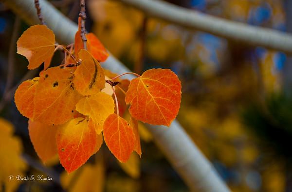 Leaf Peeping September 2015