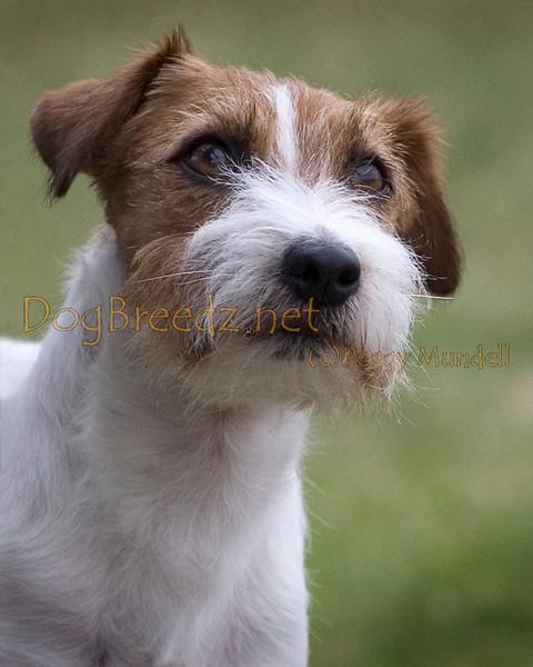 Great Western Terrier Association - June 2013 (Sunday)