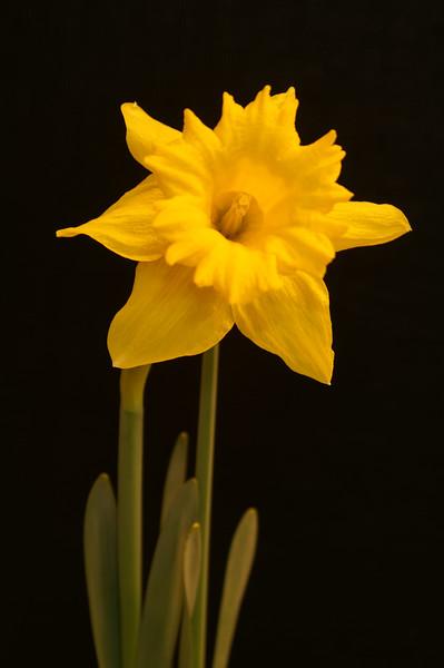 Yel Flower06.jpg
