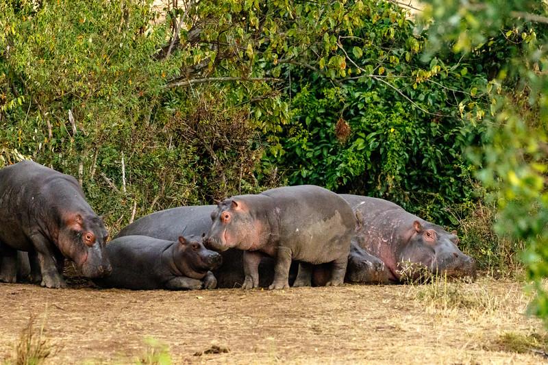 Kenya 2015-09307.jpg