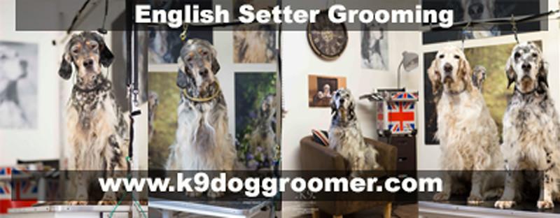 Setter Dog Grooming Rebecca UK.jpg