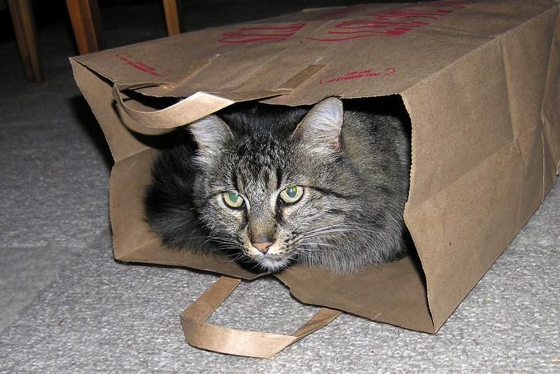 sage in a bag.jpg
