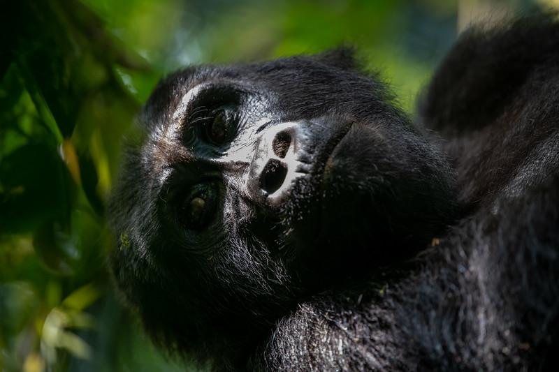 Uganda_T_Gor-1637.jpg