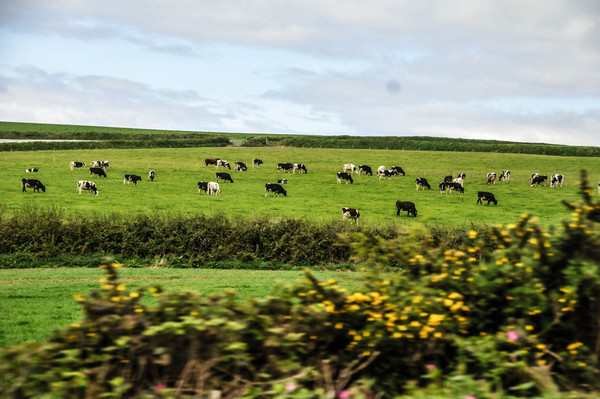 Cornwall 2012