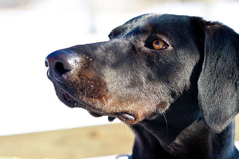 1202_Dogs_133.jpg