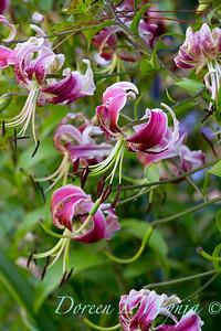 Lucy Hardiman & Fred's Garden