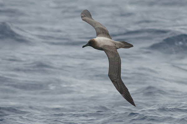 2014 August 16 Southport Pelagic
