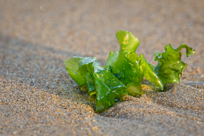 Sand and Seaweed.jpg