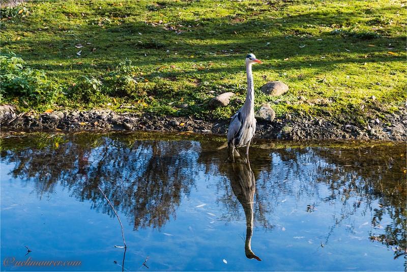 2017-11-16 Zoo Basel - IMG_3535.jpg