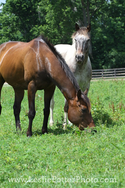 Horse and Pony Friends