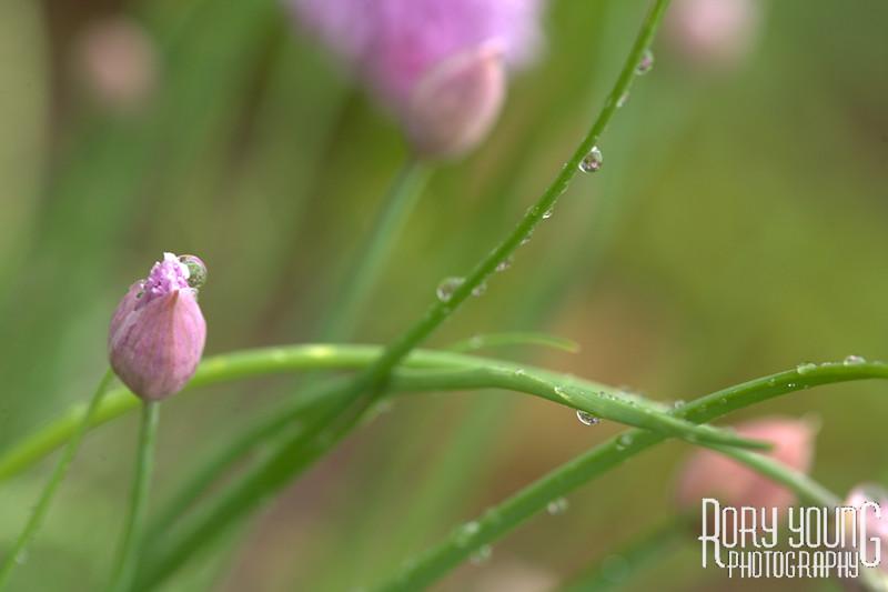 5D-Flower-A.jpg
