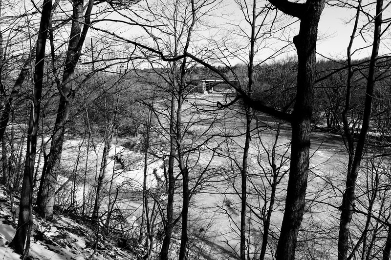 Humber RIver Through The Trees