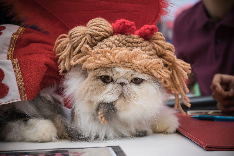 VividSnaps-The-Seletar-Mall-CAT-Dress-Up-Contest-274.jpg