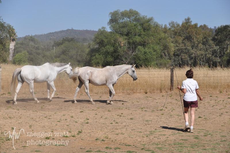 EB&Horses-101.jpg