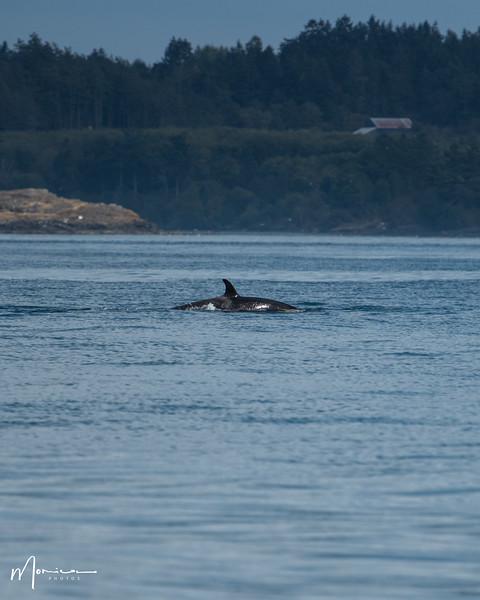 2019-08-31 - Whale Watching-2474_edit.jpg