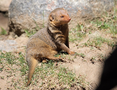 San Diego Zoo 10-2007
