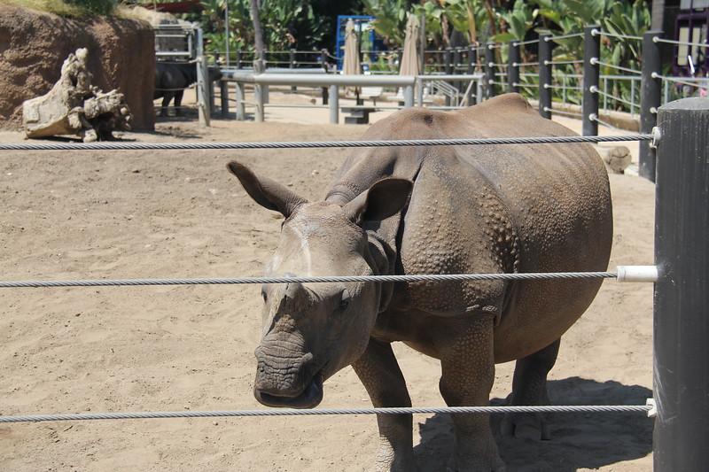 20170807-066 - San Diego Zoo - Rhinoceros.JPG