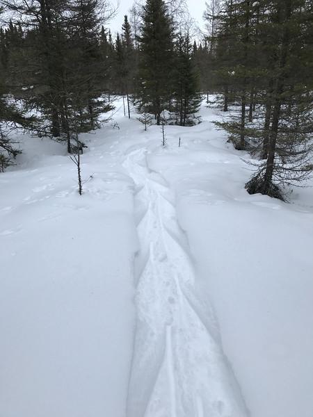 Snowshoeing at Yellow-bellied Bog Sax-Zim Bog MN IMG_0048.jpg