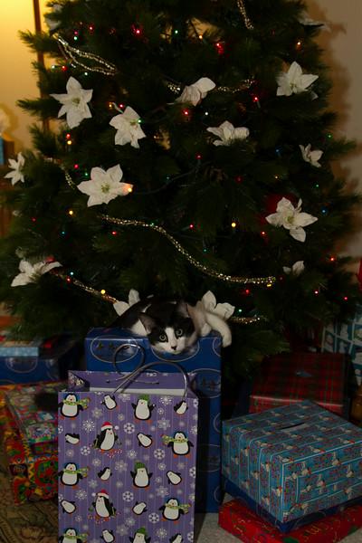 Christmas Day 2012-7113.jpg