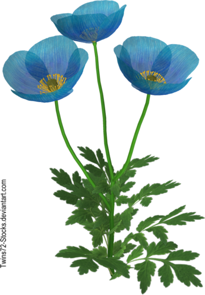 flower_9_by_twins72_stocks-d4jkhwr.png