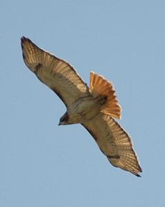 Spring '08 Birds