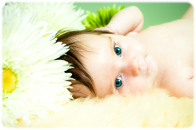 VIDEO ~ Baby Anika Newborn Session