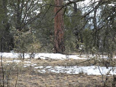 Elk Hunt 09