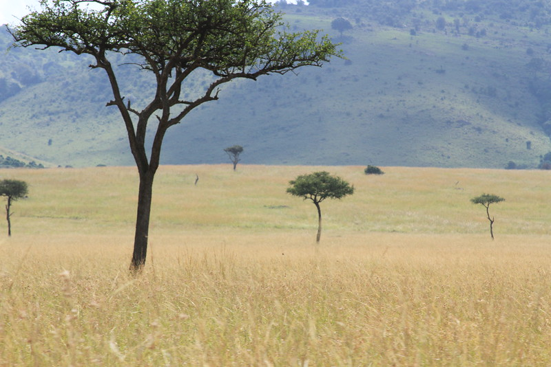 Kenya Part2 '15 889.JPG