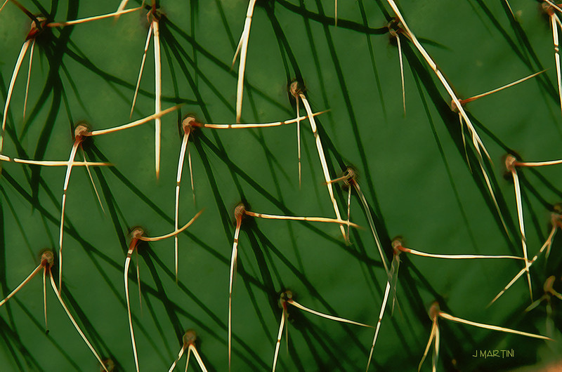 catus needles 4-4-2008.jpg