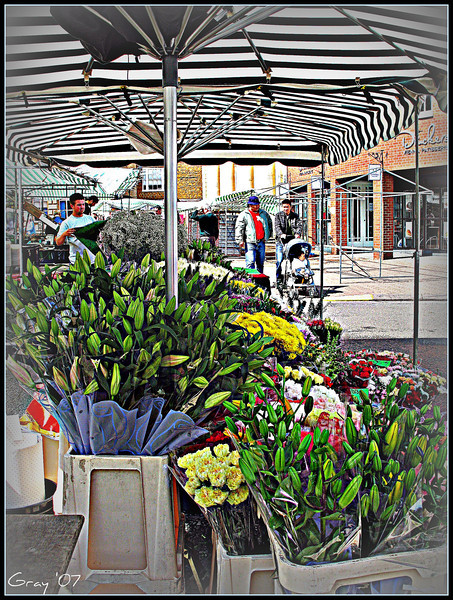 Banbury Blooms  Market Day