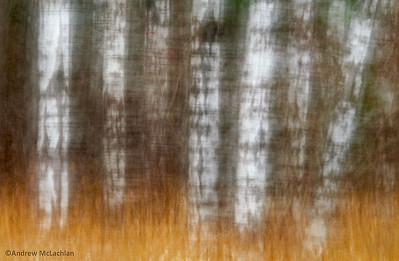 Impressionistic Blurs