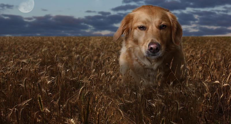 Douglas-dog-5.jpg