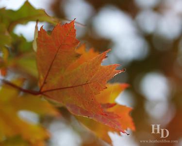 2011-10 Leaves