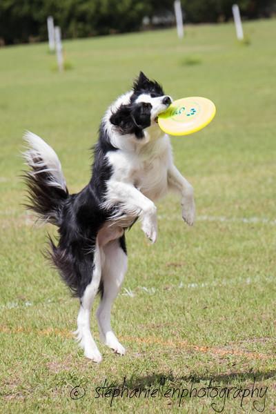 _MG_2825Up_dog_International_2016_StephaniellenPhotography.jpg