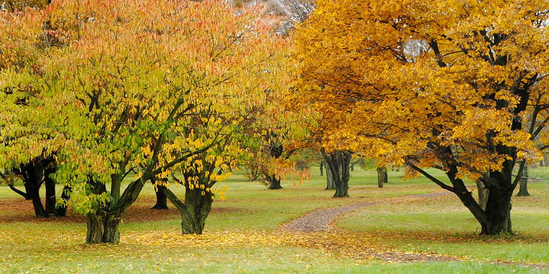 Colorful trees, Morton Arboretum, Illinois