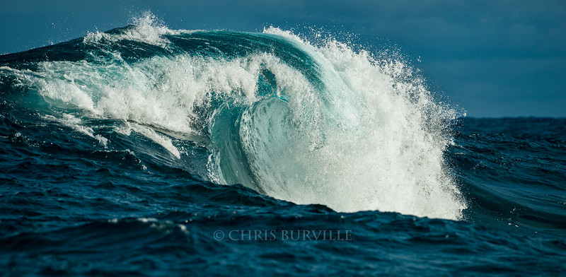 Photo by Chris Burville. Permission for one time use only Feb 2017. Massive waves break over an outer reef Saturday following the passage of a gale force winter storm Friday.