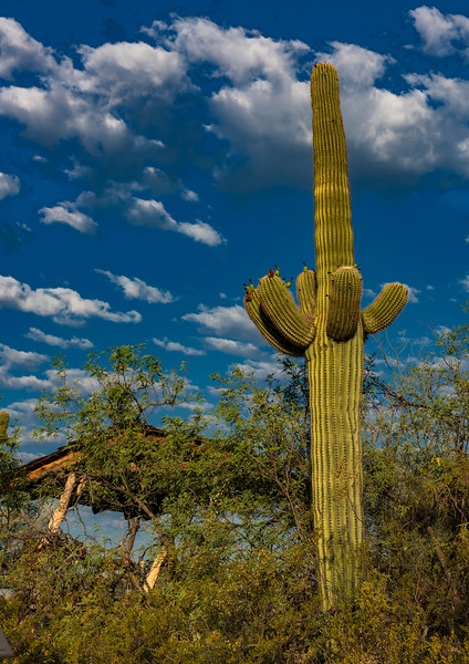 Arizona_050617_0380.jpg