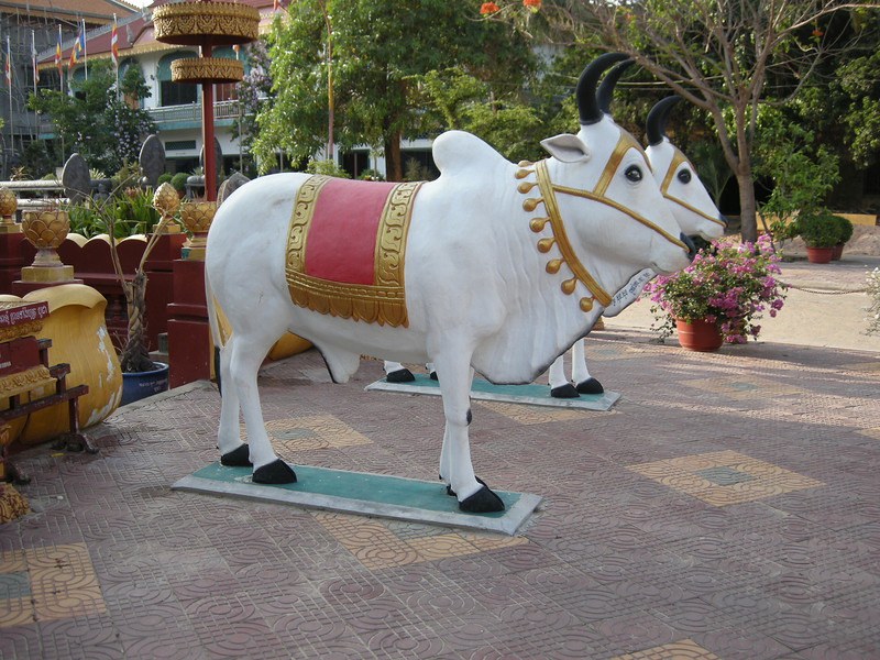 Two sacred cow statues at Wat Preah Prohm Rath pagoda