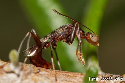 Mantid Cicada Wasp