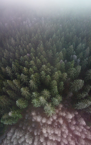 Frosty Forest in Skåne